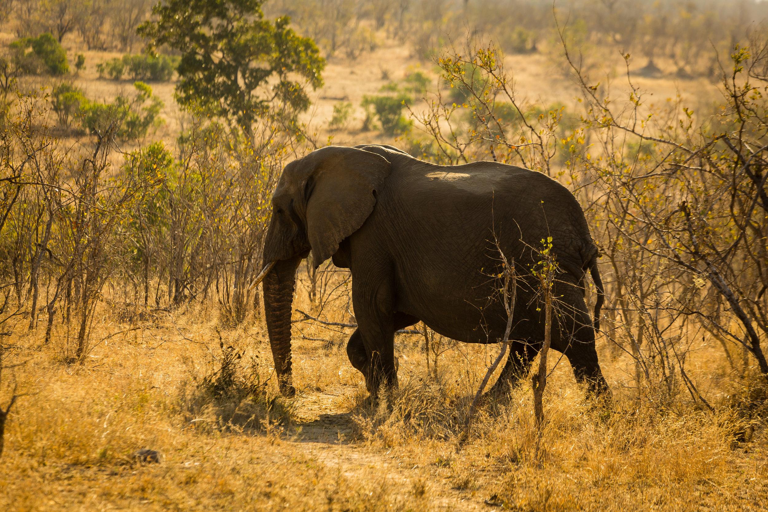 Kruger National Park World Challenge (22).jpg