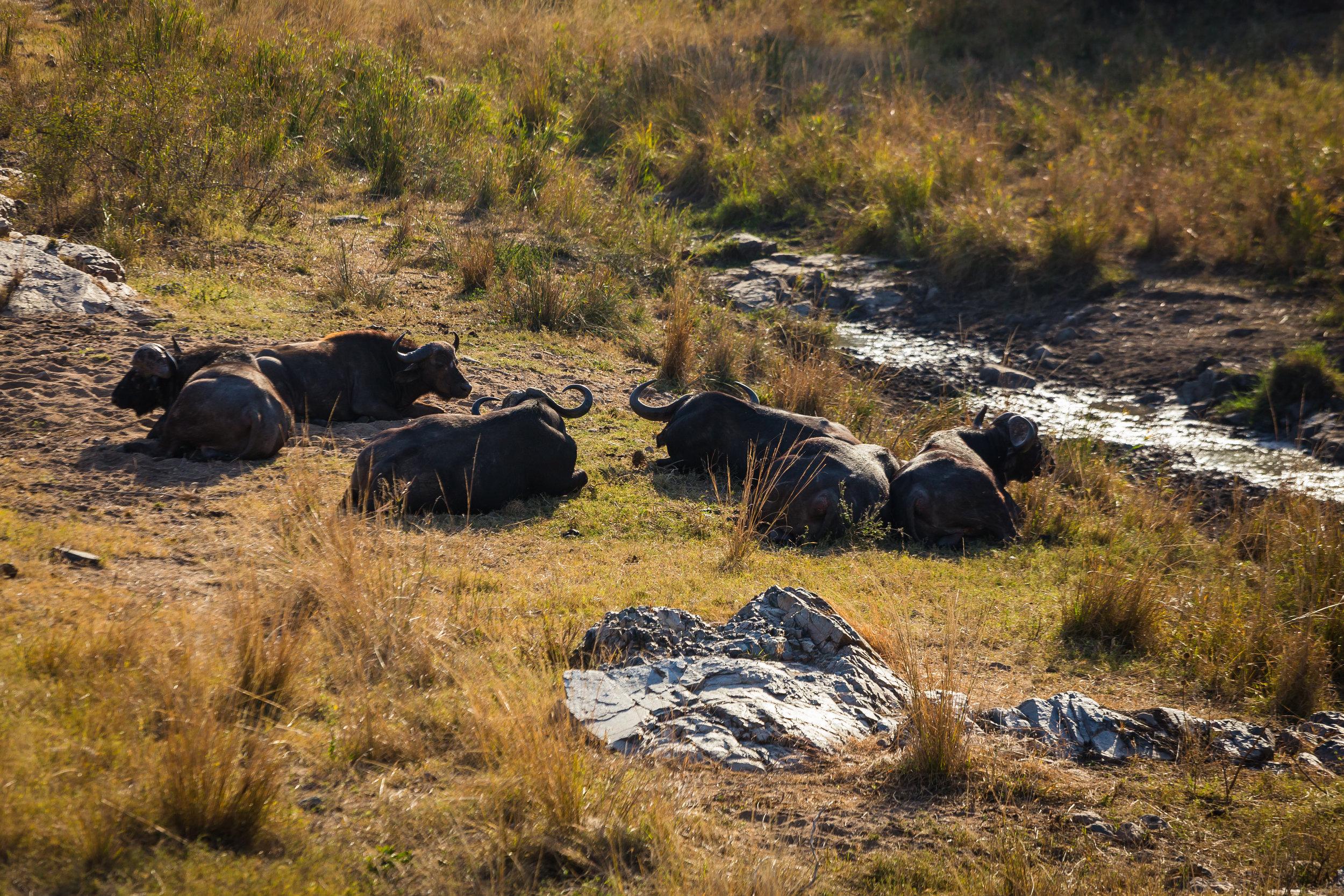 Kruger National Park World Challenge (23).jpg