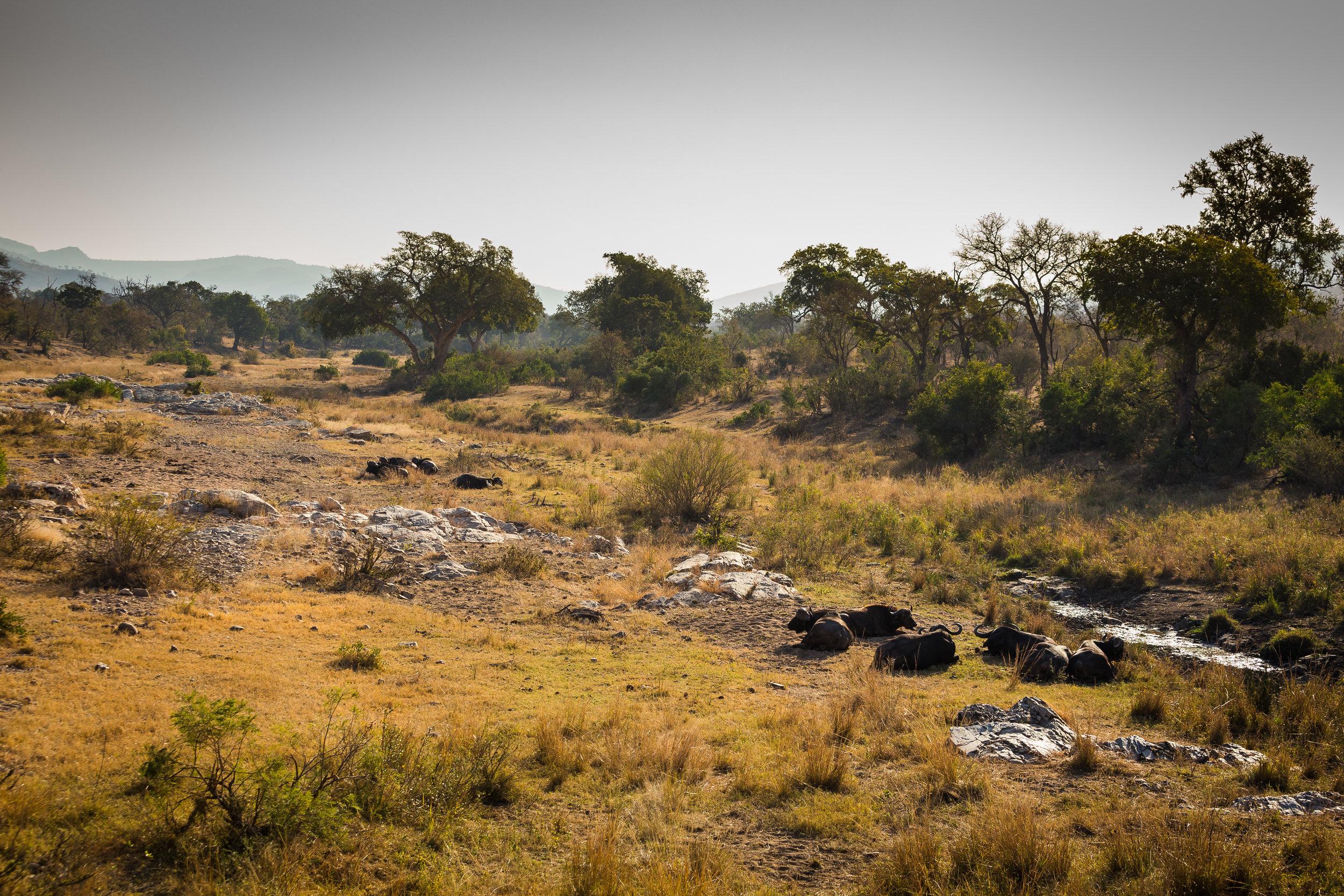 Kruger National Park World Challenge (24).jpg