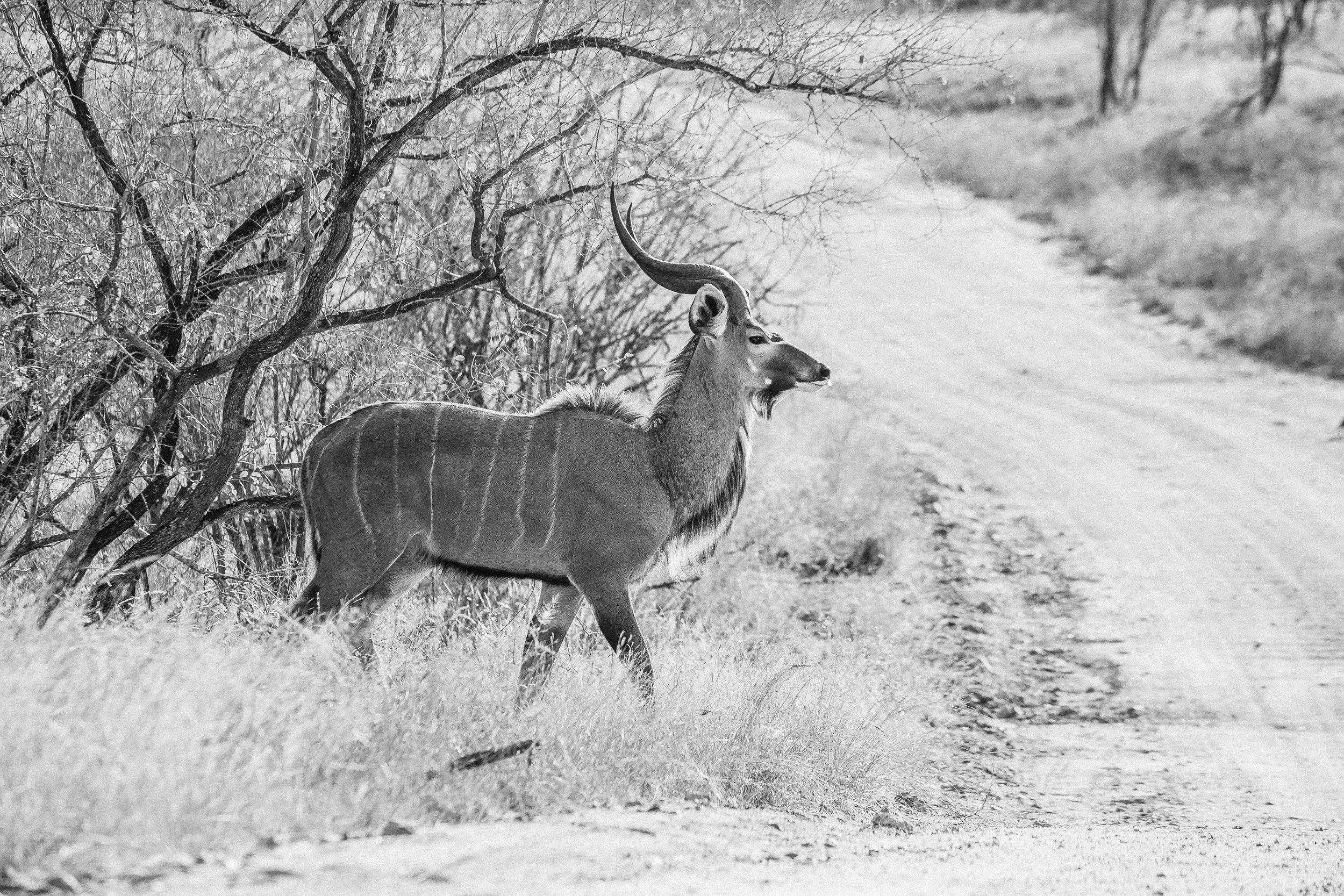 Kruger National Park World Challenge (25).jpg