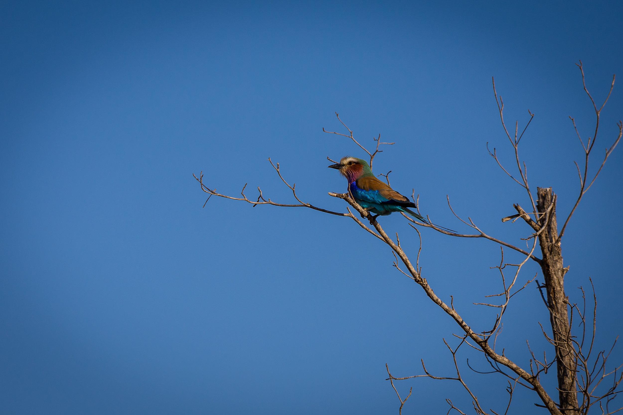 Kruger National Park World Challenge (27).jpg