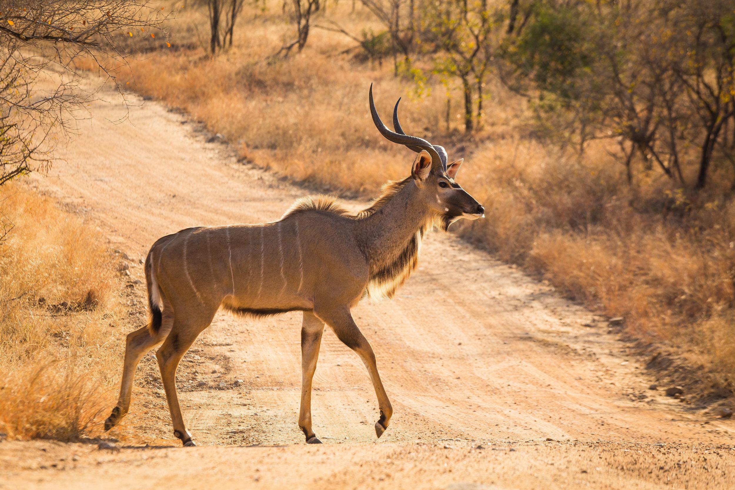Kruger National Park World Challenge (26).jpg