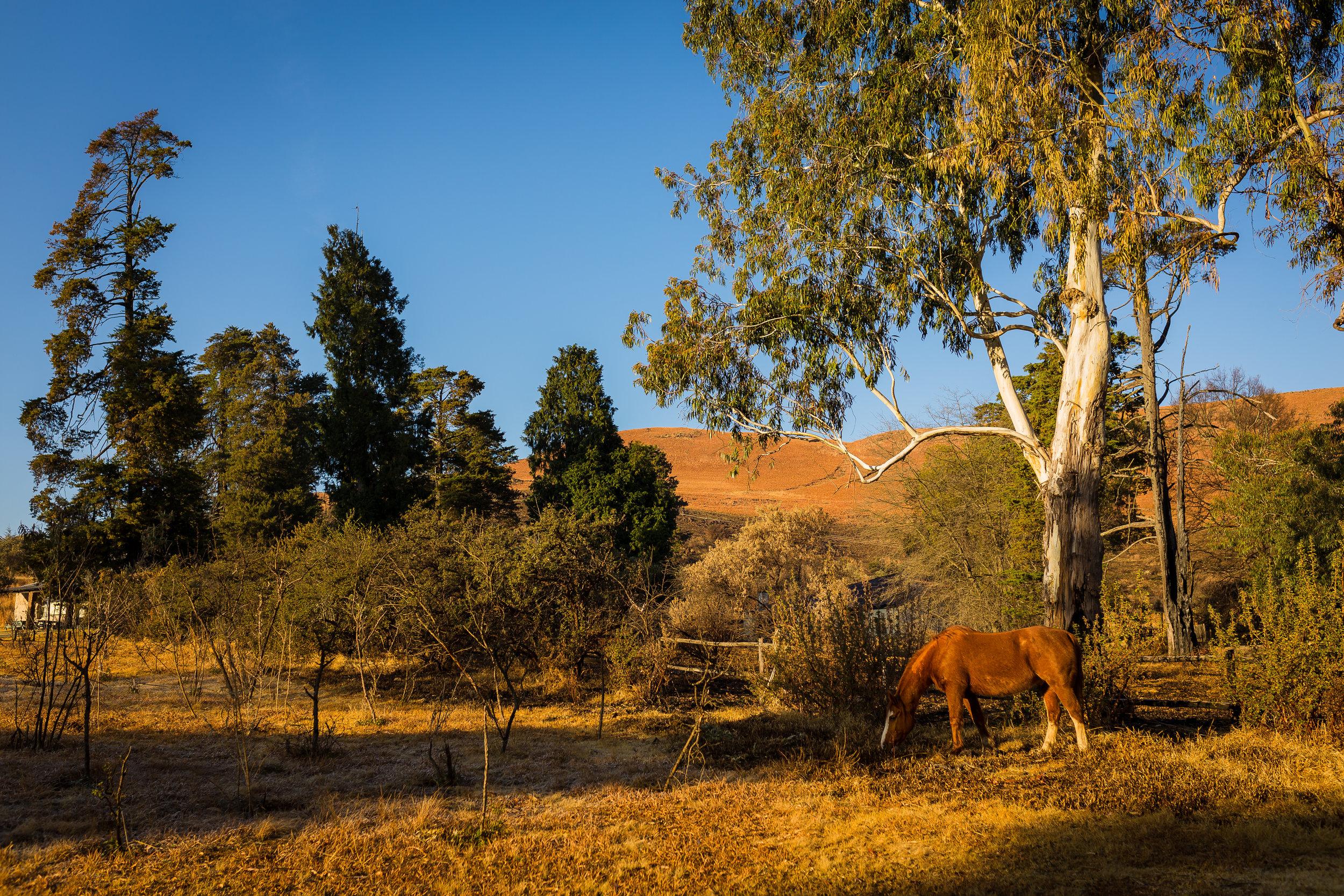Giants Cup Trail Drakensberg Mountains (2).jpg