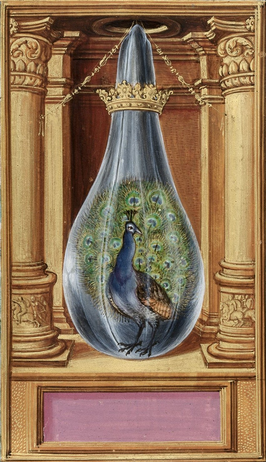 Peacock_from_BL_Harley_3469.jpg