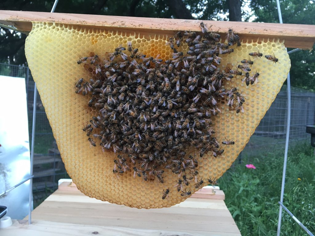 """This is our first hive. It' s traditional to name the Queen, so this one is """"Adrianne."""""""