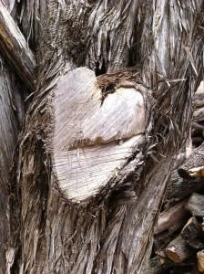 Heart in Tree.jpg