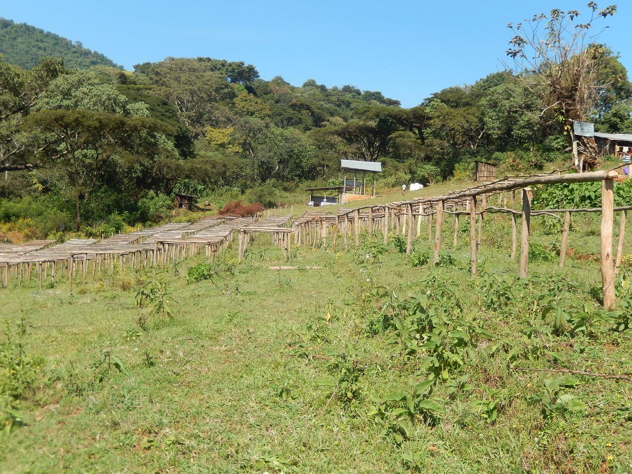 ethiopia-biftu-gudina-8.jpg