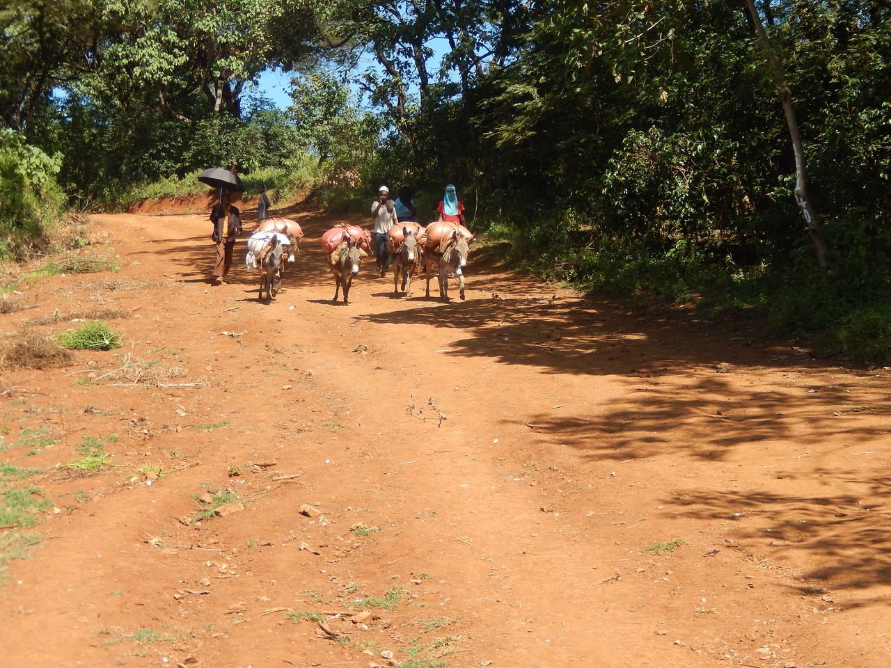 ethiopia-biftu-gudina-10.jpg