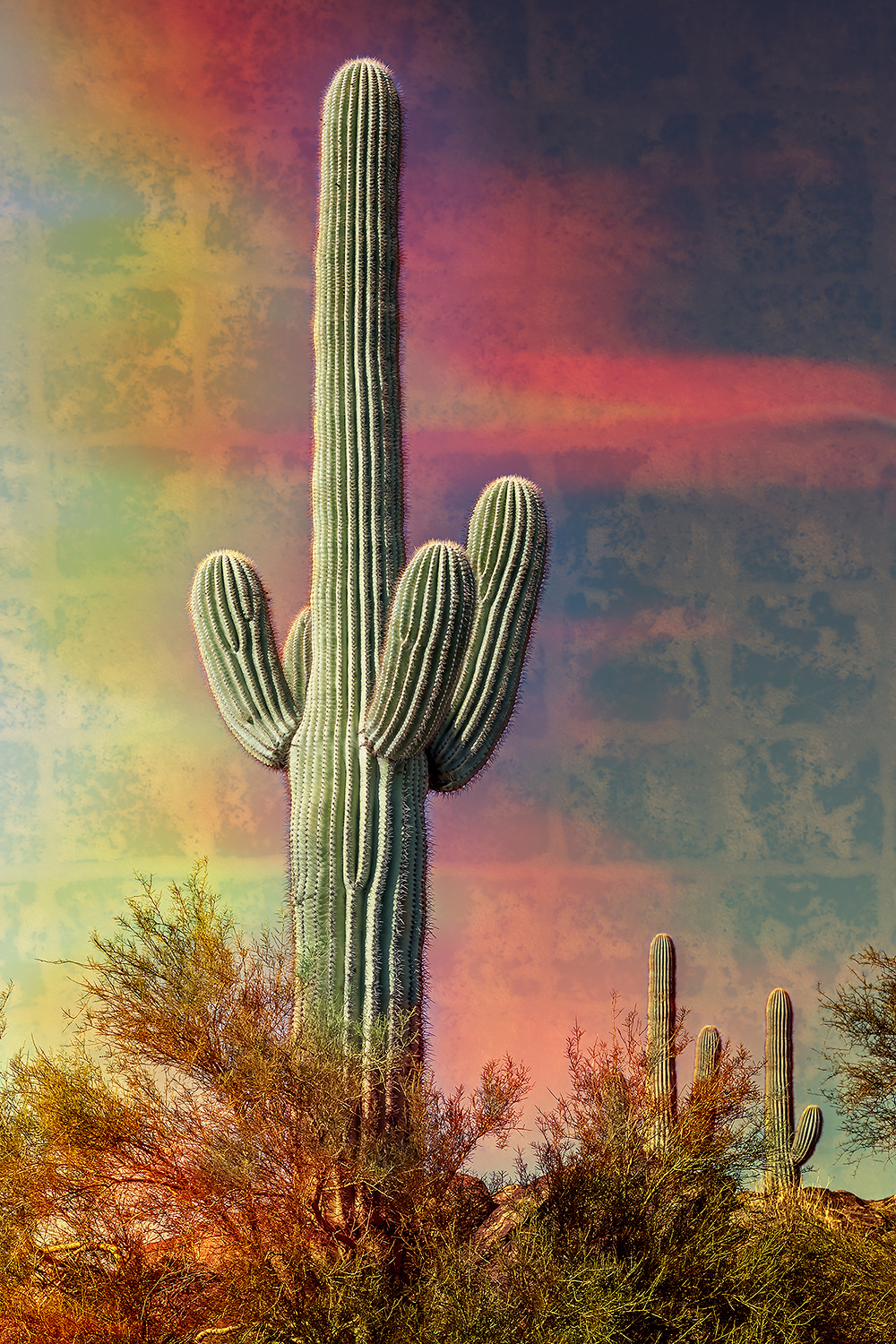 Bold Saguaro Cactus in the desert with colorful and textured background.