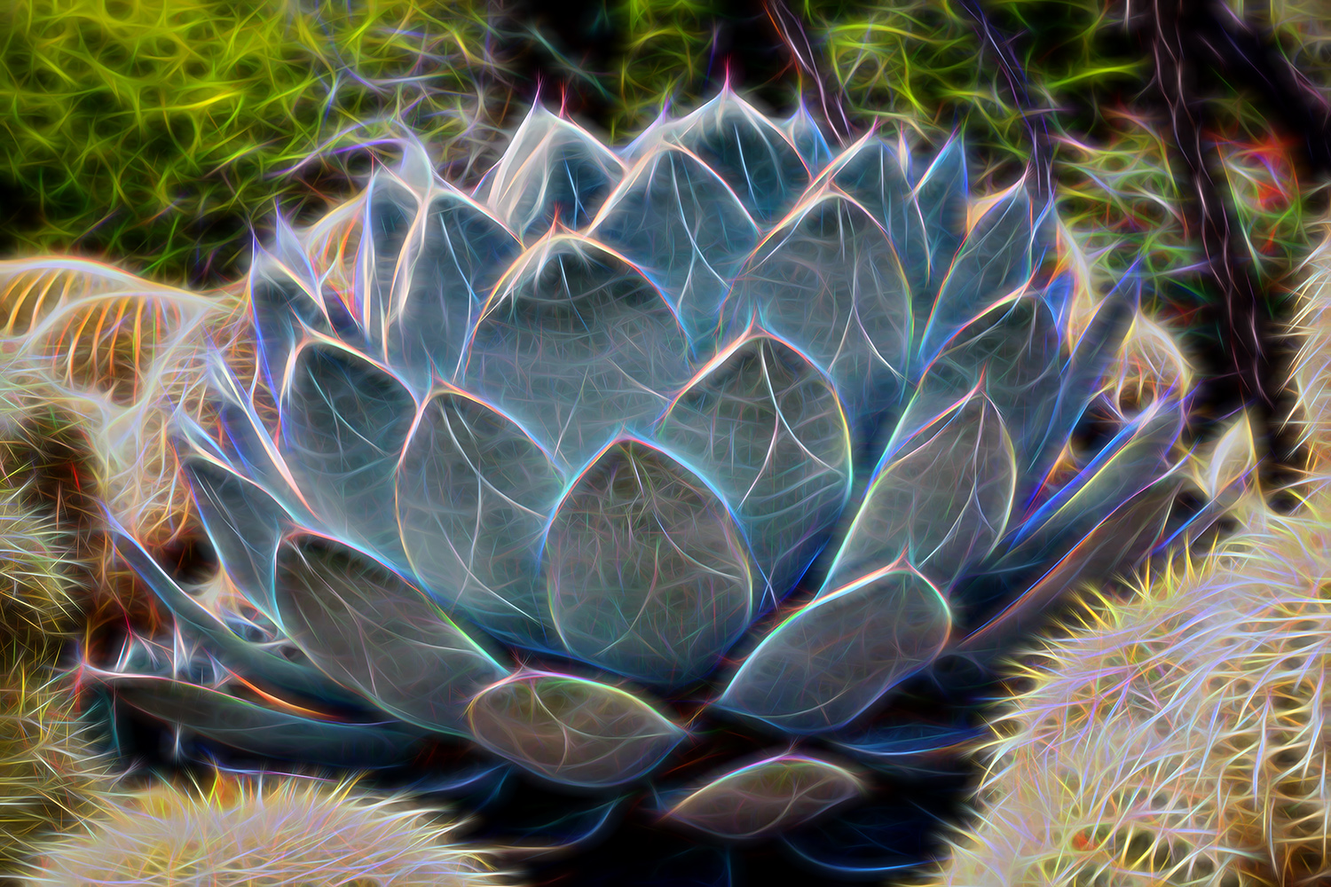 Artichoke Agave Cactus with an artistic glow.