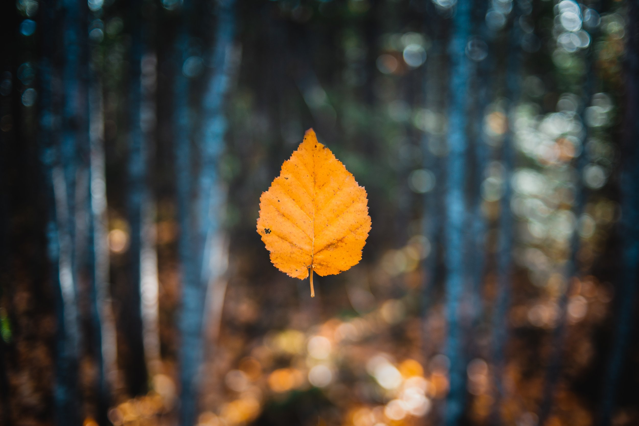 Fall is Coming - And sooner than you think