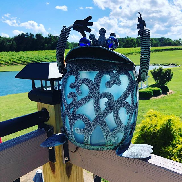 FriYay!! Come visit🍷🍷. The wine is delicious. #yadkinvalleywine  #drinklocal  #ncwine  #summertime #shadowspringsvineyard