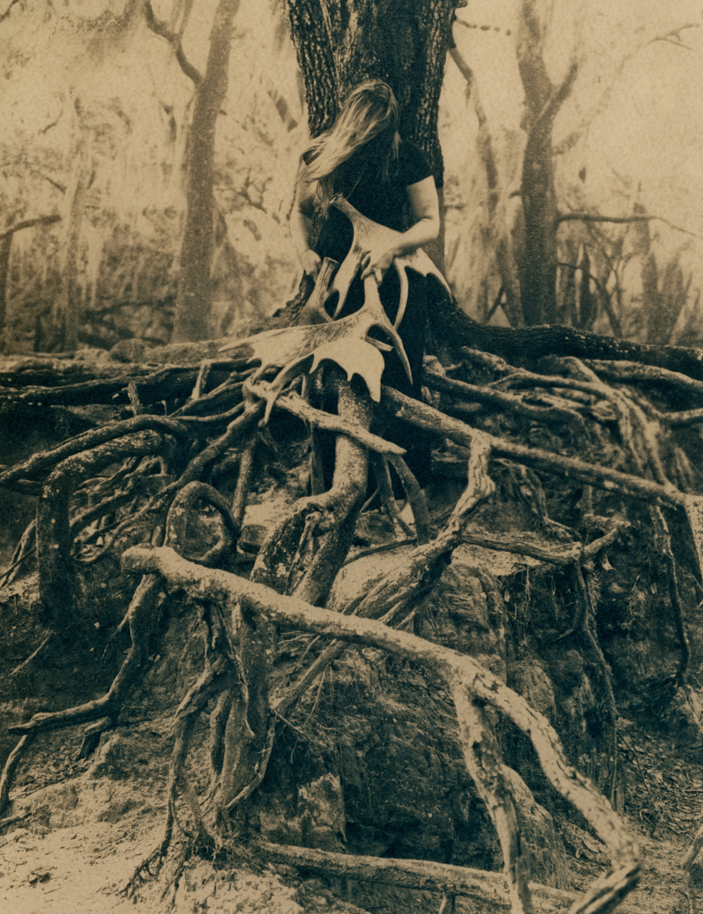Where the Roots Rise.jpg