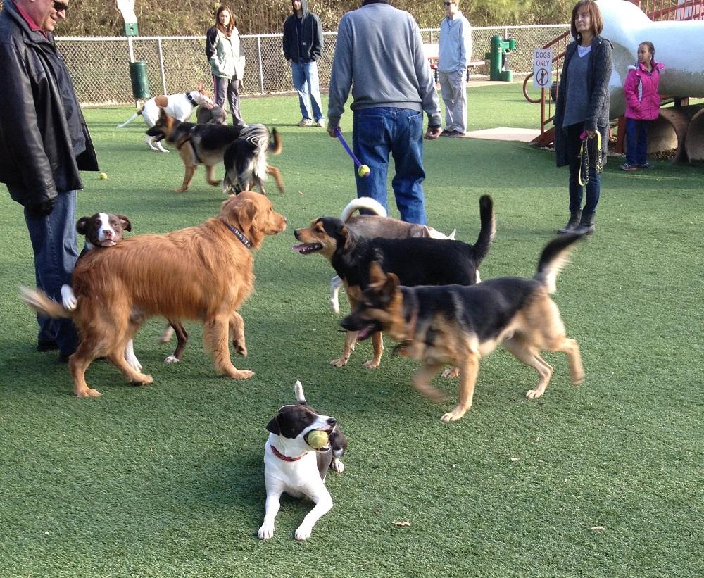 Dog Park Tail #1.jpg