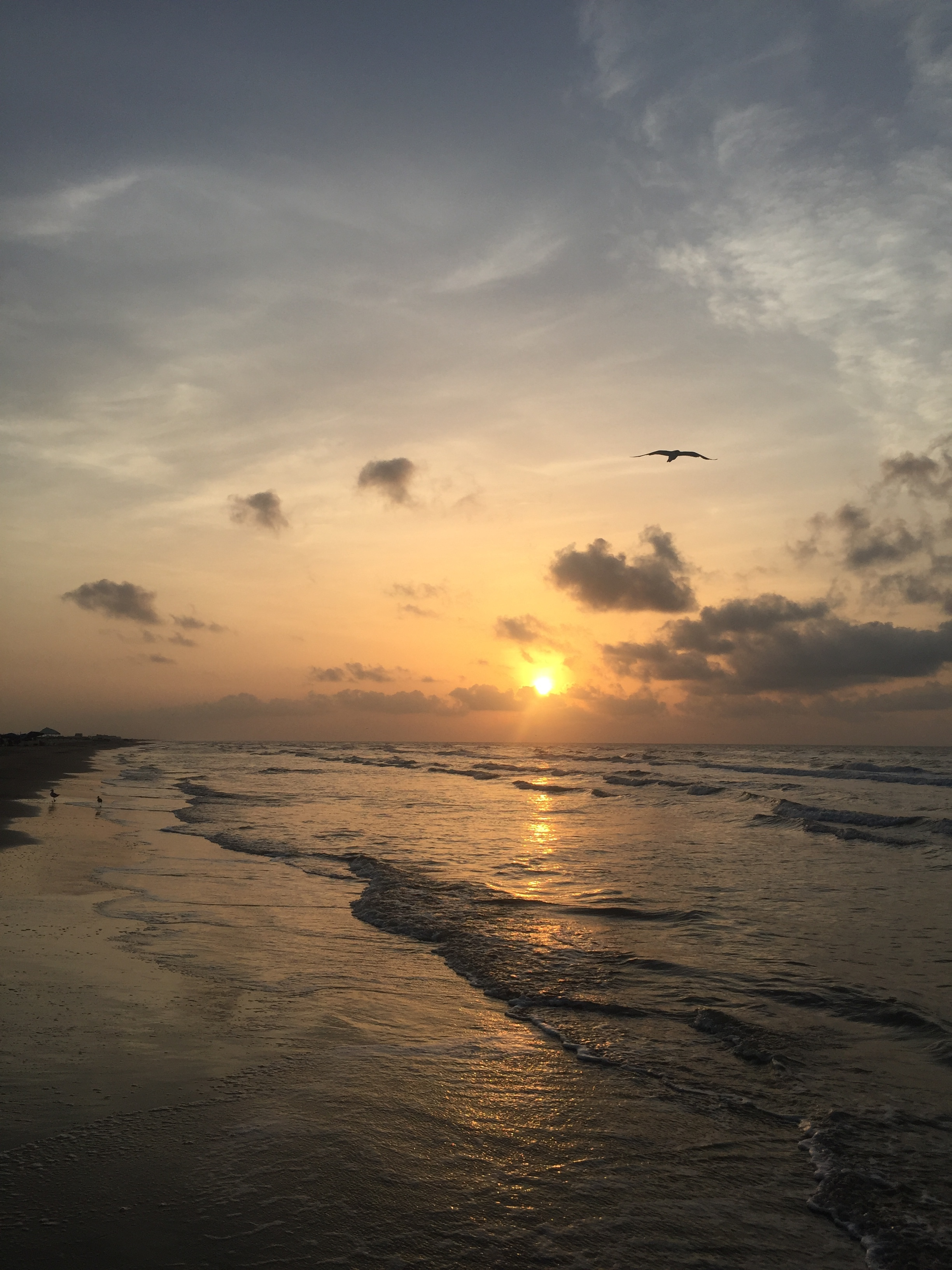 ramble and rove - texas blogger - lifestyle blogger - beach - texas beach - surfside beach - galveston beach - Texas gulf - seagull - beach sunrise - Gulf of Mexico