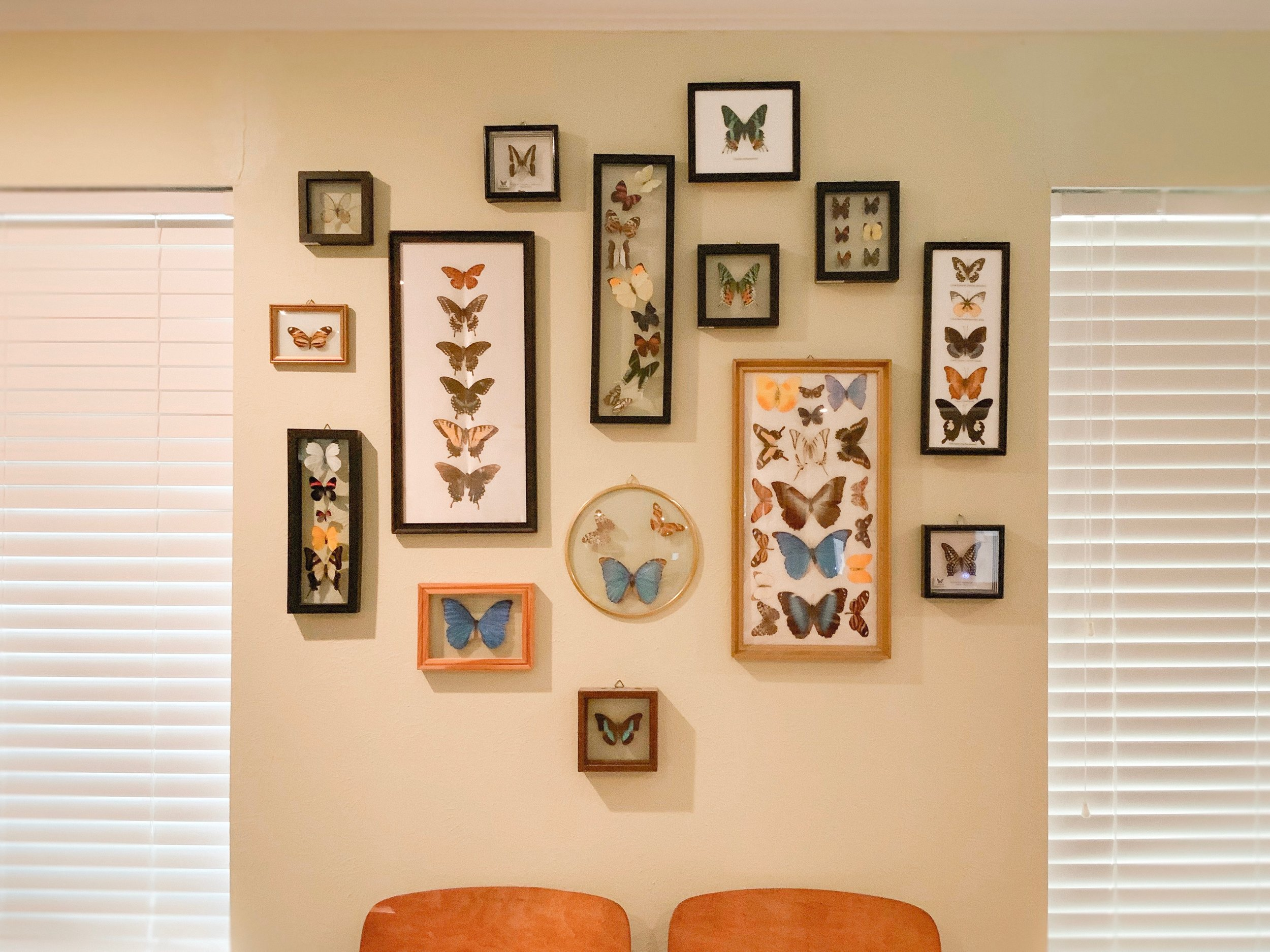 The butterfly wall in my front room.
