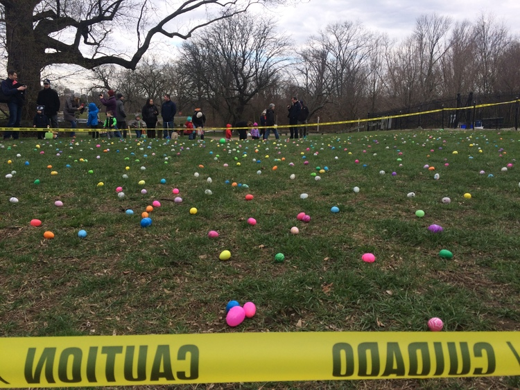 This was a difficult, difficult hunt. I want to say that my son is above average intelligence, because he did not have trouble finding eggs here.