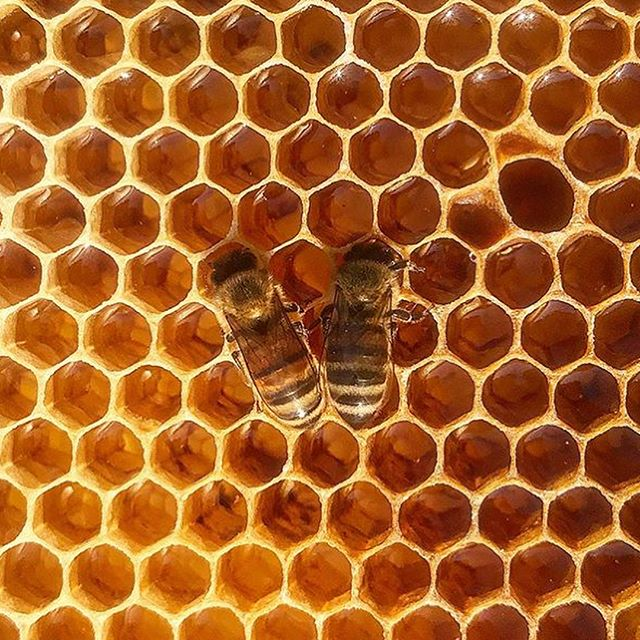 HAPPY NATIONAL HONEY BEE DAY 2018! Flip for our favorite organizations, a bee babe that is changing the world one sip at a time and our new skincare go to. We support products that promote conservation and ecological responsibility. #savethebees🐝 #savethebees #honey #beeconservation #beekeeping #urbanbees #texasbees #bees #manukahoney #skincare #naturalskincare #cbd #cbdhoney #naturalmedicine #naturalhealth #savetheplanet #manuka #wellness #honeybee #health #conservation #pollinatenotpollute