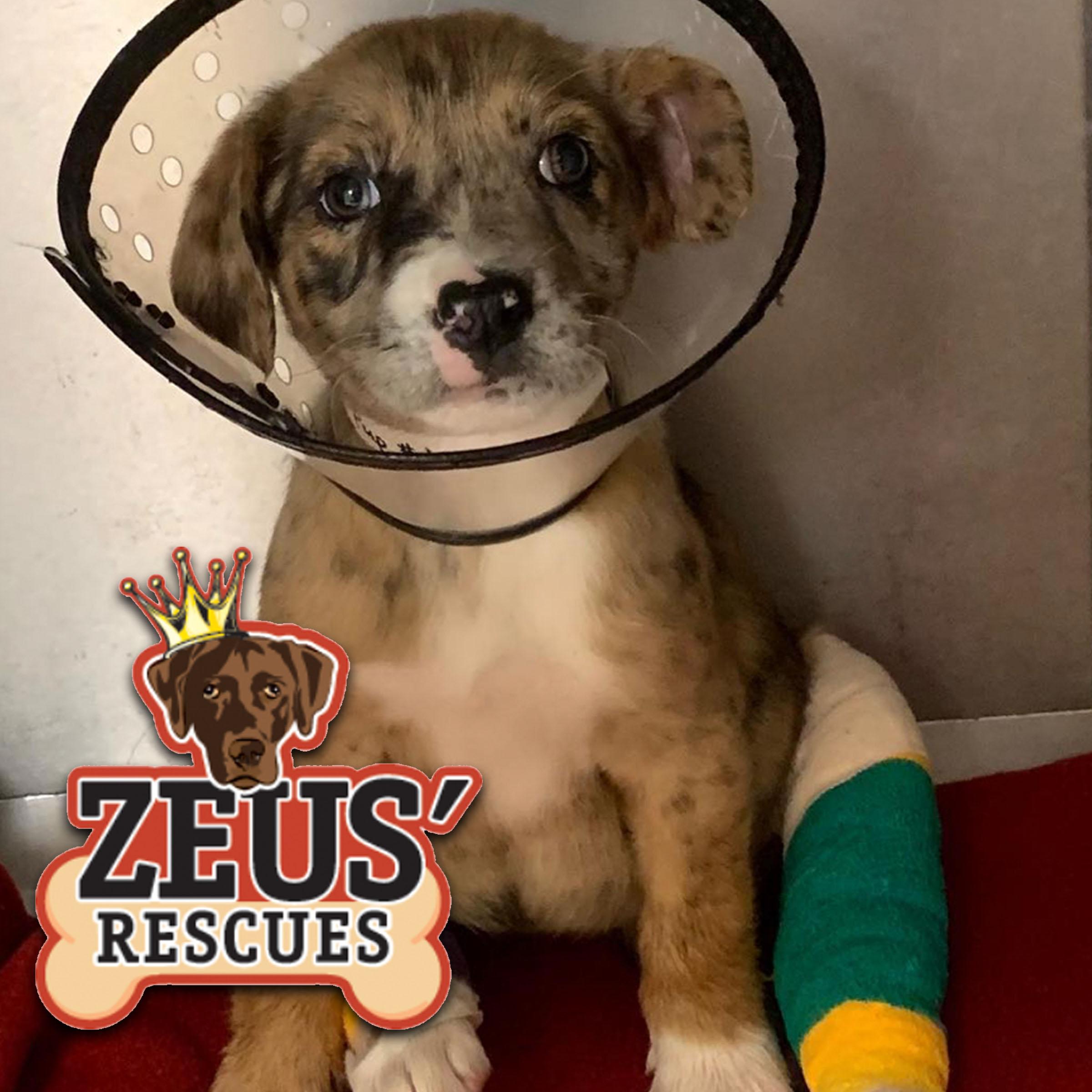 Zeus' Rescues - @zeusrescues