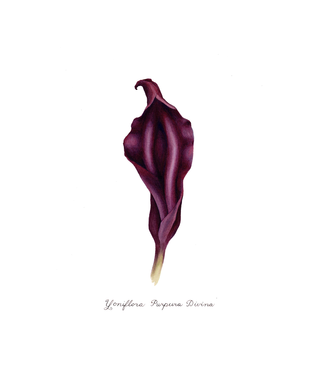 purpura divina.jpg