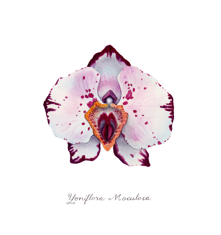 maculosa.jpg