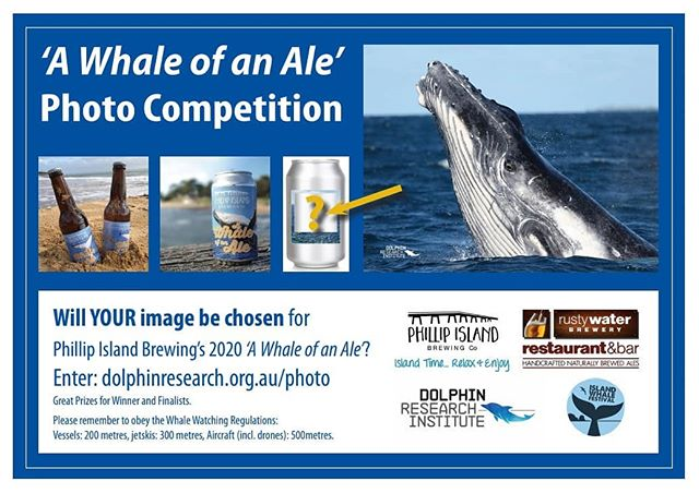'A Whale of an Ale' Photo Competition. 🐳 Follow the link below to upload a picture taken of our beautiful Phillip Island whales. Enter as many times as you would like. Competition closes, 31st of August 2019. http://www.dolphinresearch.org.au/photo/  #competition #photocompetition #win #photography  #naturephotography #design #whalewatchers #craftbeer #fun #love