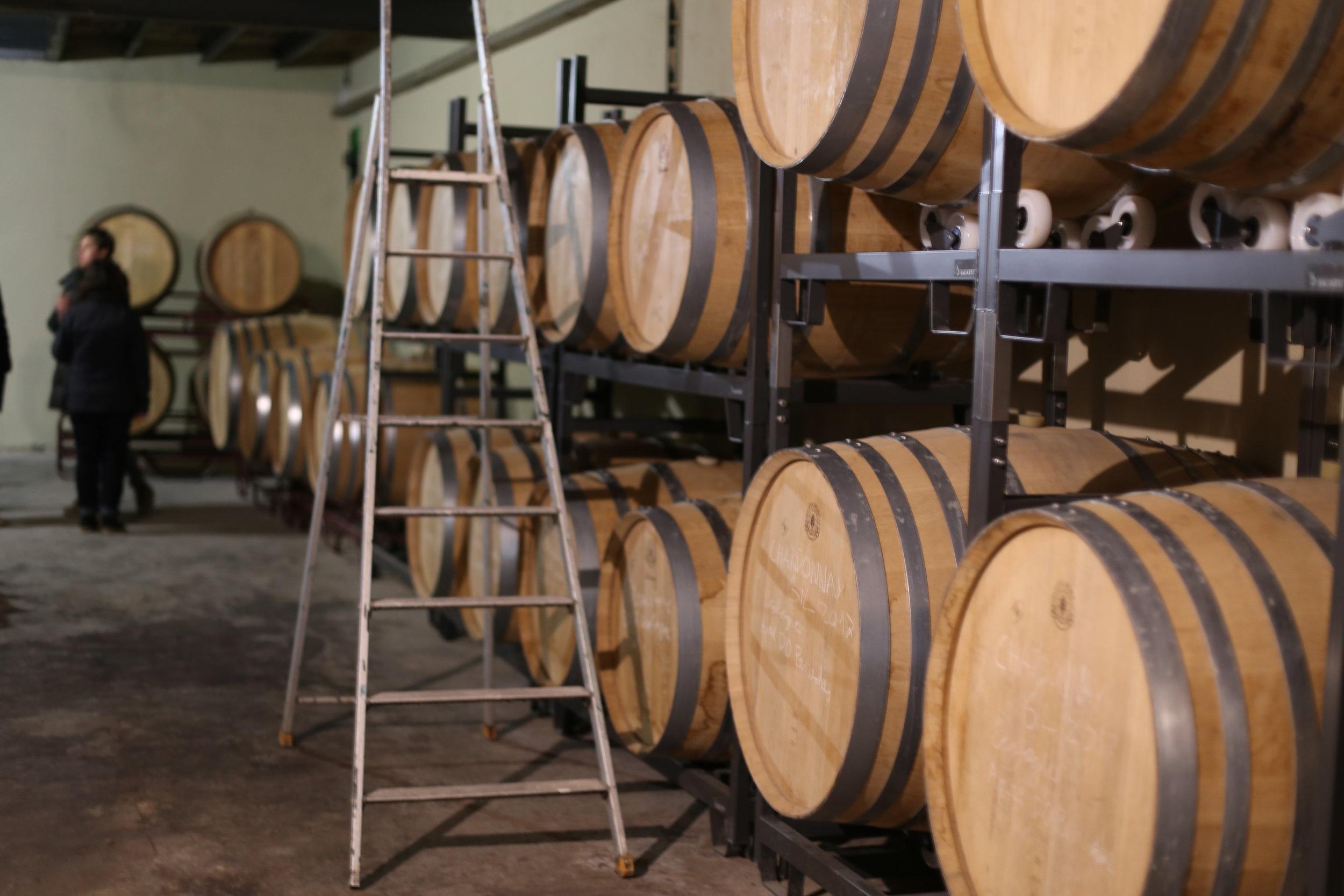 Sleeping wines in their barrels.