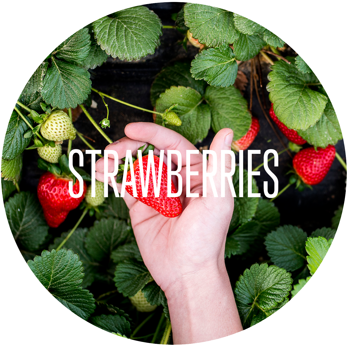 Strawberry - Our Products.png