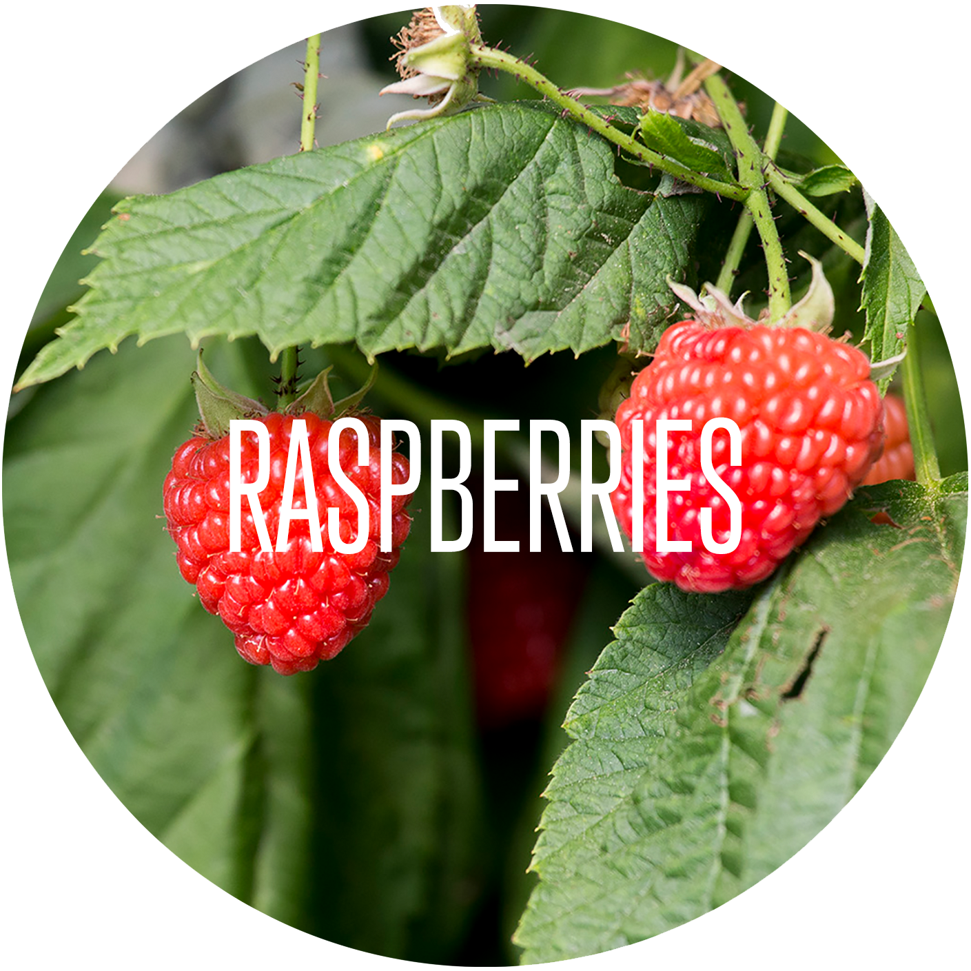 Raspberry - Our Products.png