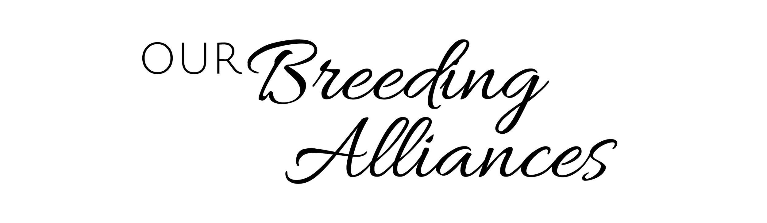 Our_Breeding_Alliances.jpg