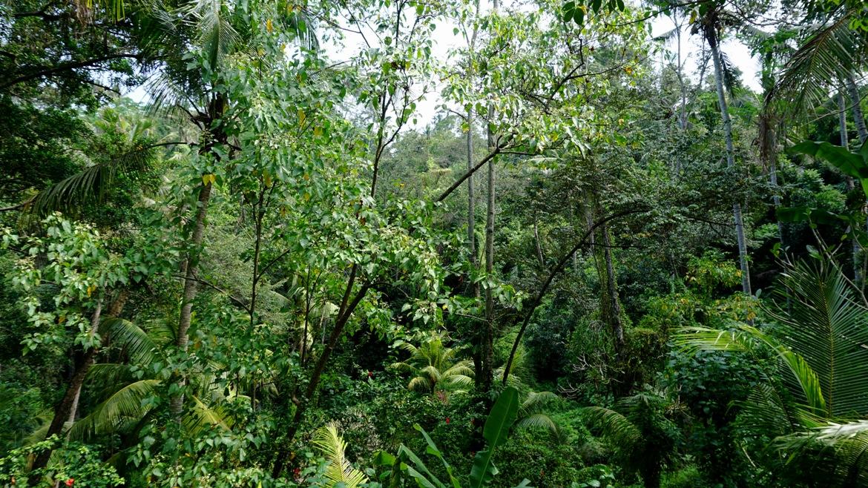 Bali-waterfalls-03-1170x658