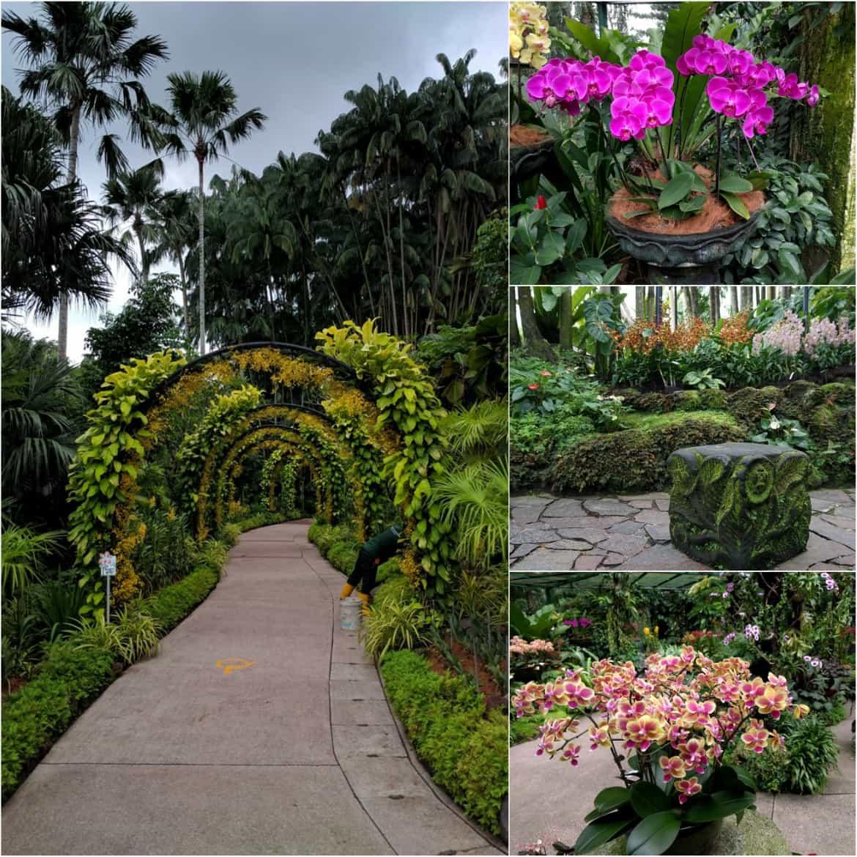 Διαφορετικά είδη ορχιδέας στους βοτανικούς κήπους της Σιγκαπούρης