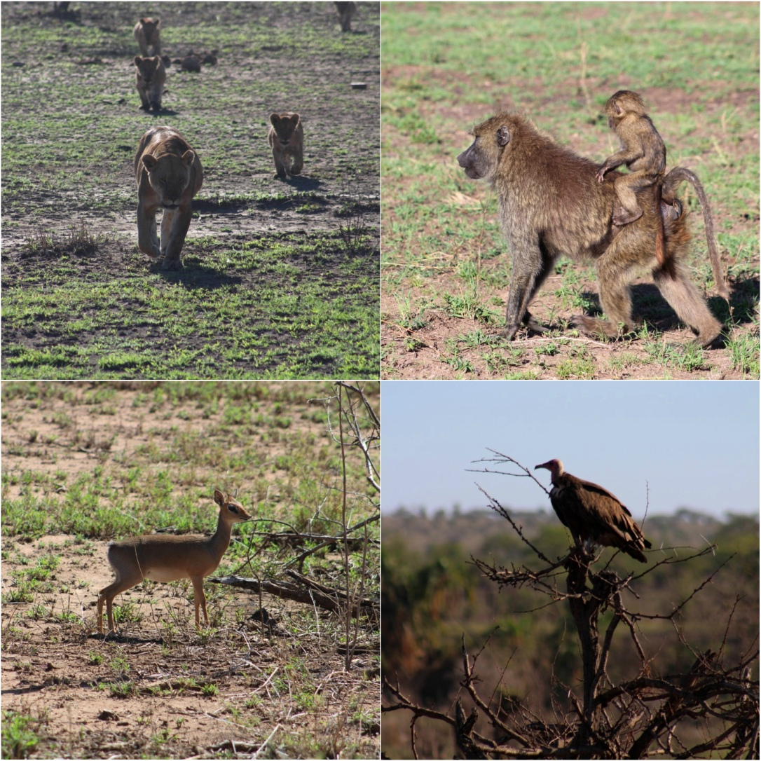 All kinds of animals living harmoniously in Serengeti