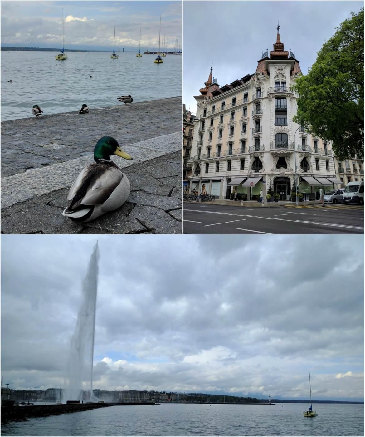 Architecture and nature in Geneva