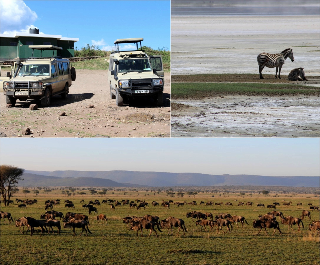 Migration of the wildebeests in Tanzania