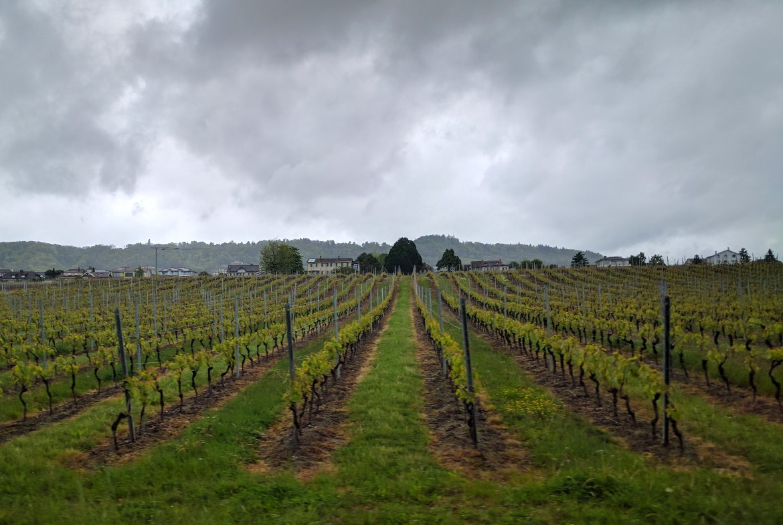Lavaux vineyards along Lake Geneva