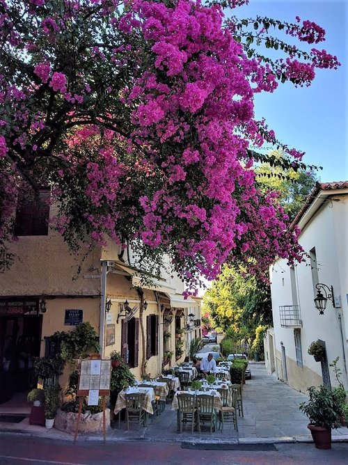 Bougainvillea in Plaka neighborhood