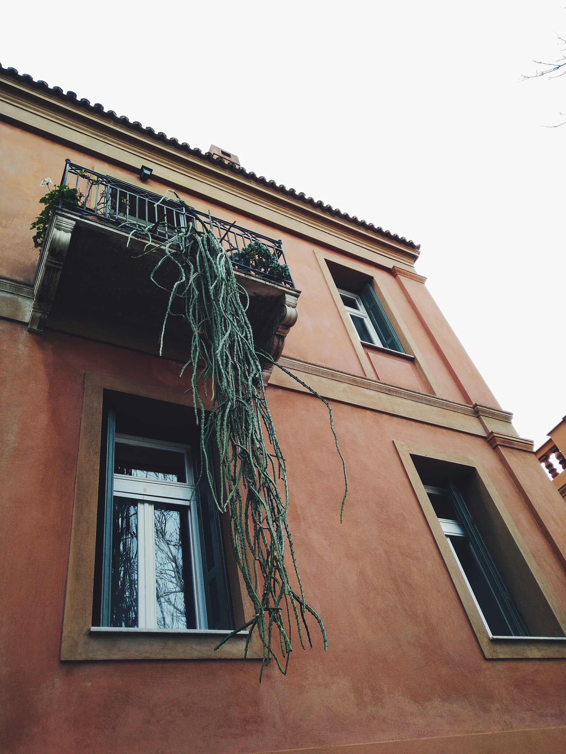 Picturesque building with an unusual hanging plant