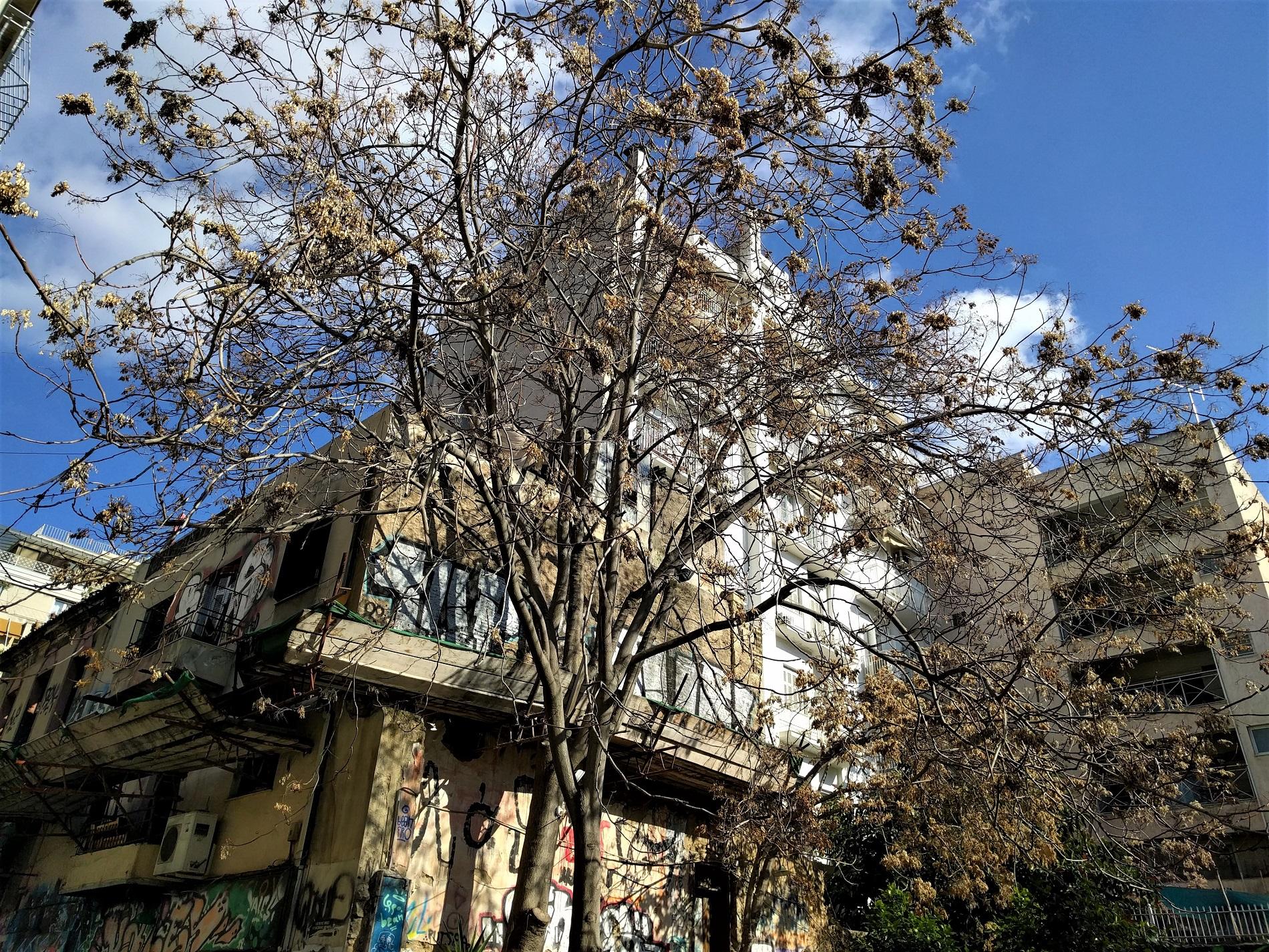 Στην εναλλακτική περιοχή των Εξαρχείων, στην Αθήνα. Πηγή: Truevoyagers