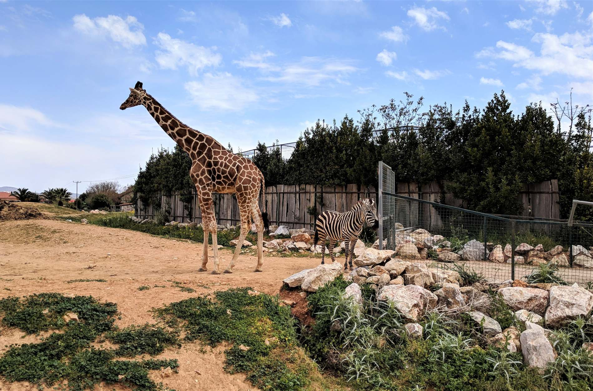 A giraffe and a zebra at the Attica Zoological Park, some kilometers outside Athens.