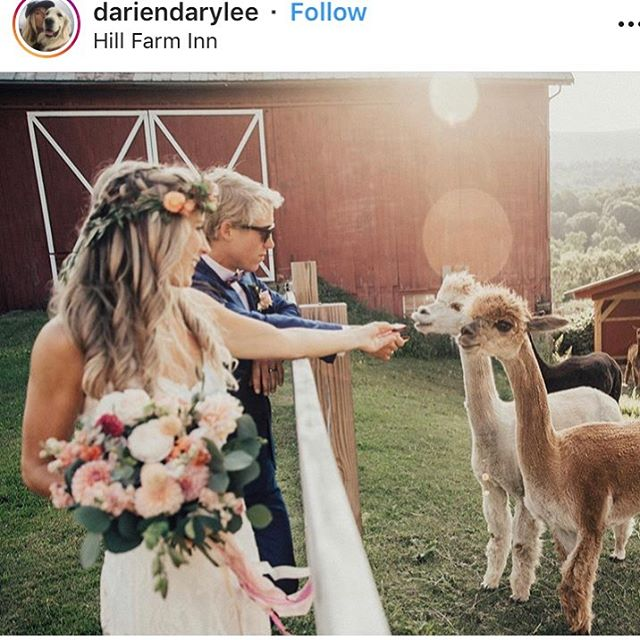 Reposting @dariendarylee gorgeous snapshot of her wedding day @hillfarminnvt this past Saturday. Can't wait to see all the photos come back! Loved making these stunning florals. #peachypalette #latesummerwedding #summerwedding #vermontflowers #vermontweddings #alpacasofinstagram #floralcrown #bohowedding #barnwedding #unfurledvermont #floraldesigner #artisanfleuriste