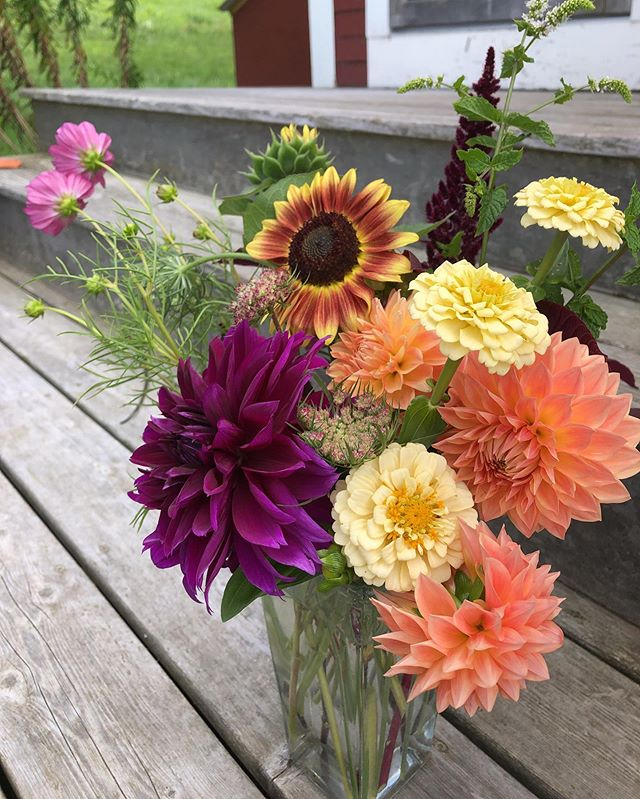 Arrangement with all my own slow grown flowers. I actually prefer arrangements with all one type of flower in the house, but love constructing with all this texture!  Now on to figuring out how to dry all these beauties. #unfurledvermont #vermontflowers #vermontgrown #flowerarranging #floristlife #flowerdesign #flowers #gardenlife #flowergardening #augustflowers #dahlias #dahlialove #flowersathome