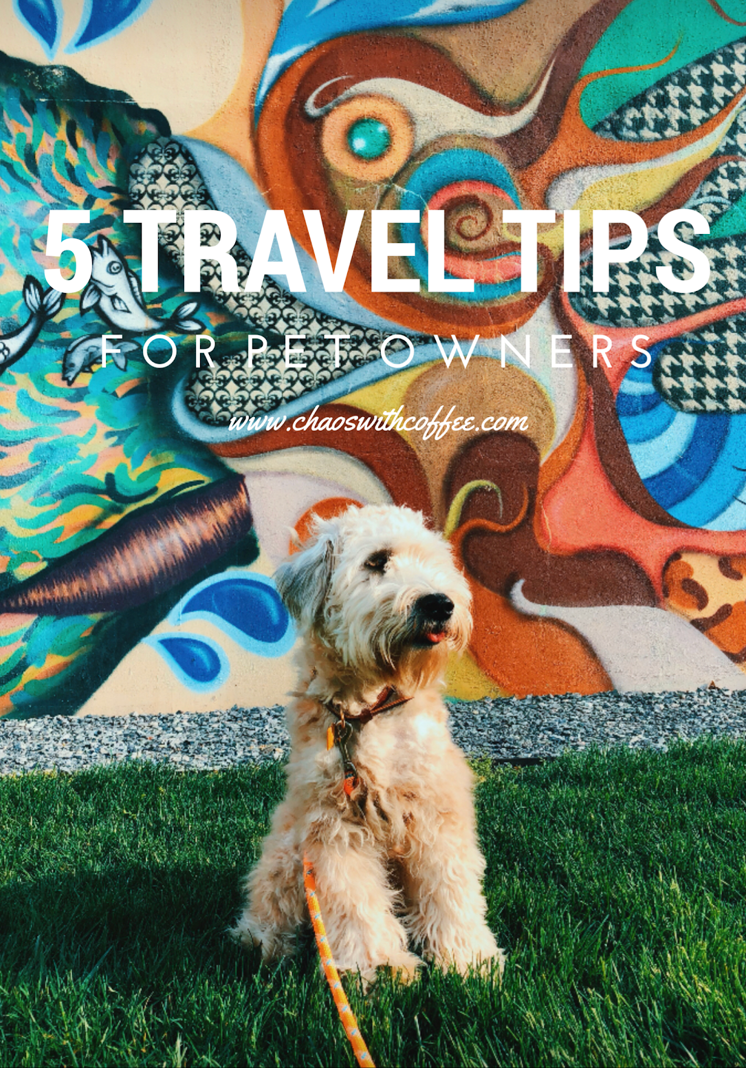 5 Travel Tips For Pet Owners via Chaos With Coffee