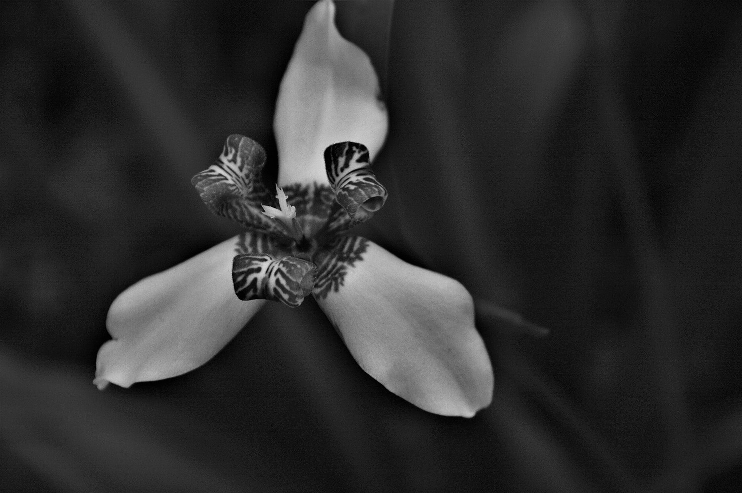 Photography by    Elisa Moga