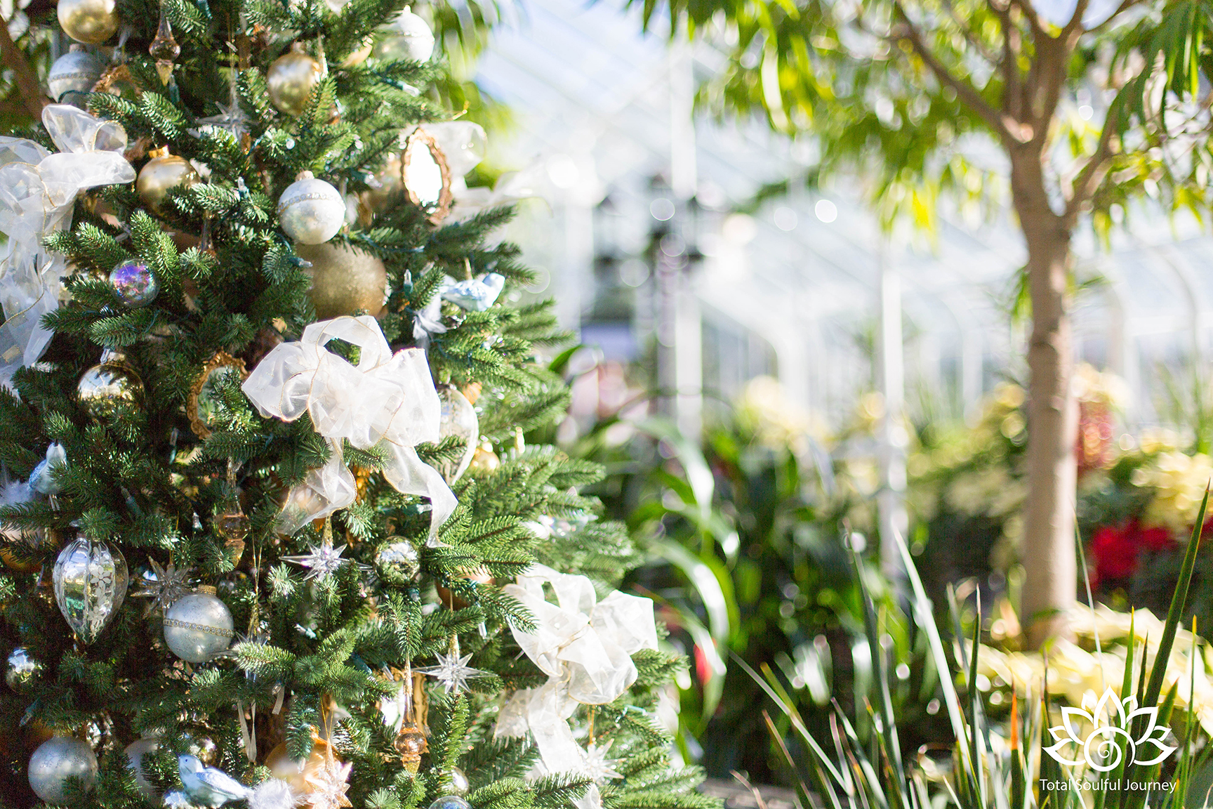 The magic of Christmas at the Volunteer Park Conservatory - Photography by Paul Garrett