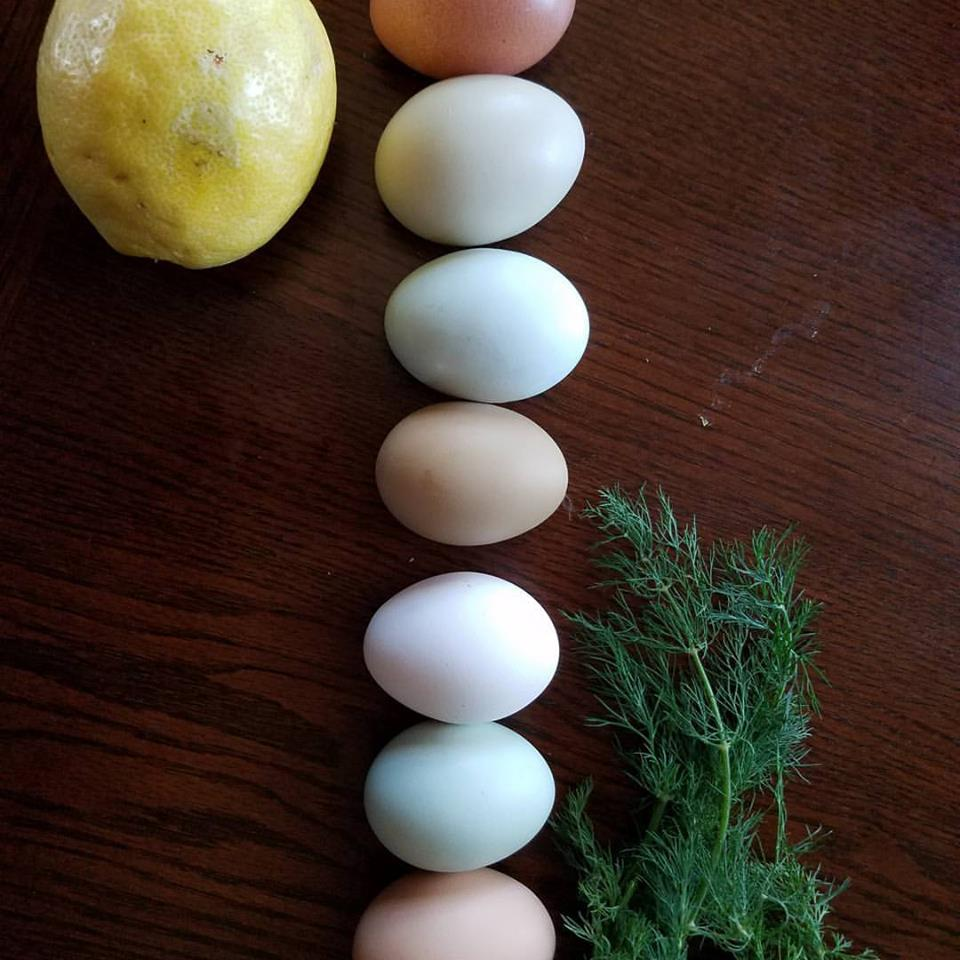 PASTURE-RAISED EGGS - Anti-Aging, Regenerate Skin