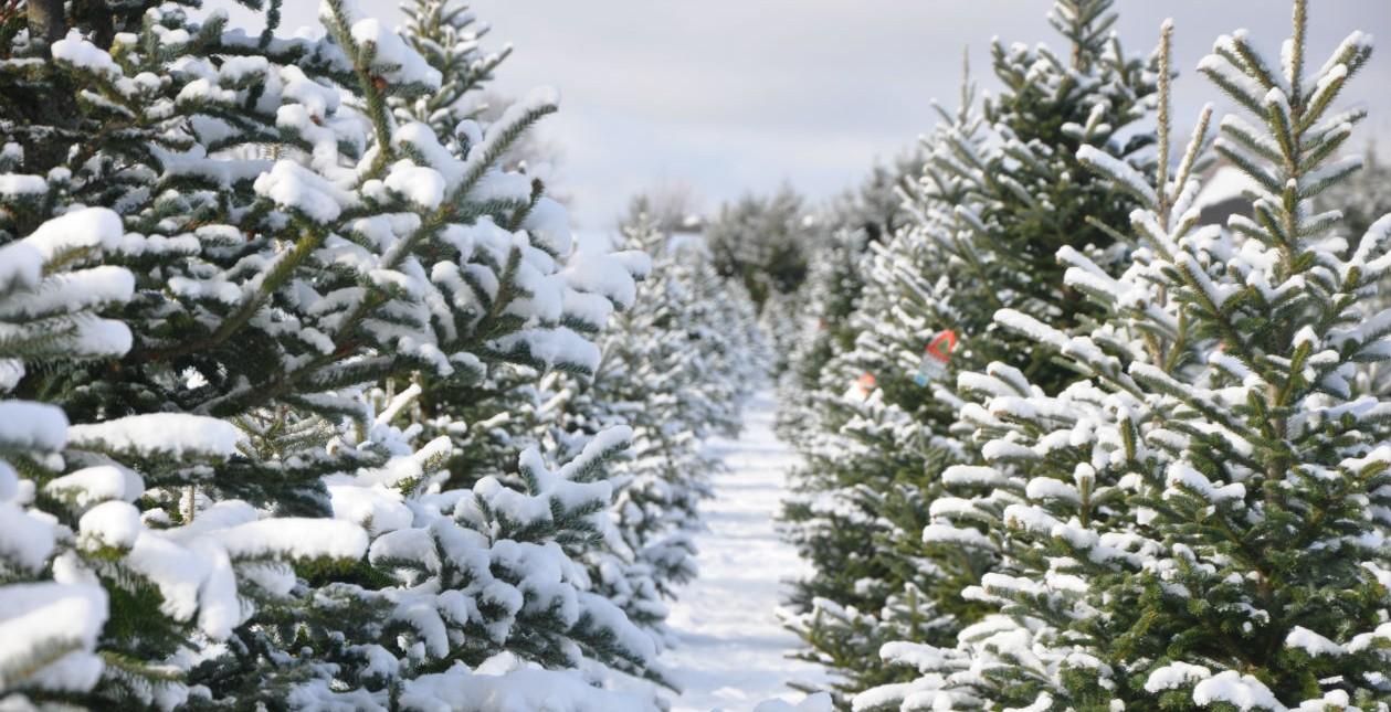 snowytreefield_1259_645.jpg