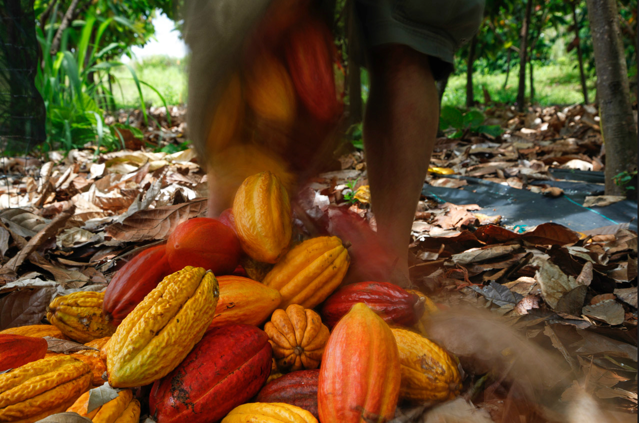 cacao.bag.jpg