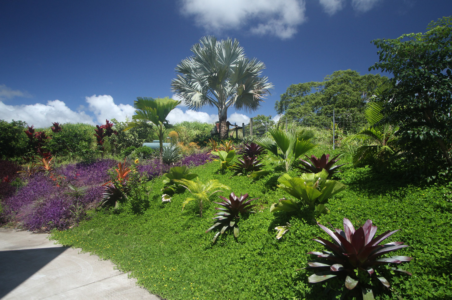 garden.8360.jpg