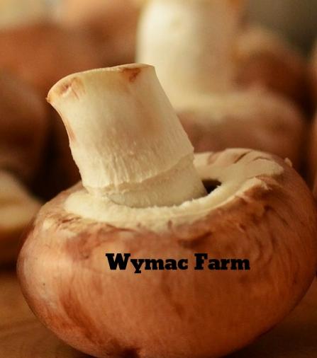 mushrooms-756406_1920.jpg
